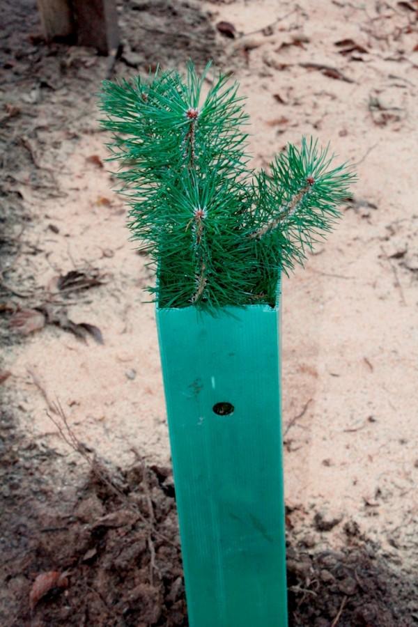 Atemberaubend Constantina Draht Um Baum Bilder - Elektrische ...