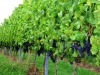 Weinwanderung (49)