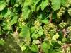 Weinwanderung (54)