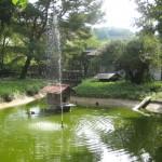 Heute Bachufer –  Fest im Tierpark von Rauenberg