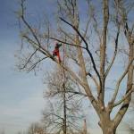 Baumpflegemaß-nahmen in Baiertal und Schatthausen