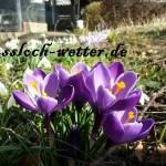 Winter ade? Ein verfrühter Frühling ist da!