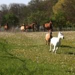 Ostermarkt bei Rosinantes Paradies für Pferde in Not e.V.