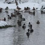 Winter – des einen Freud, des anderen Leid