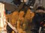 Aktuell: Hangrutsch in Baiertal – mit Bildergalerie