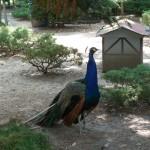 Heute: Im Tierpark Walldorf wird gefeiert!
