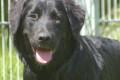 Heute: Infostand- Listenhunde am Samstag, den 20. Januar
