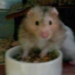 Tierfutter Sponsoring Aktion zugunsten des Tierheimes Sinsheim