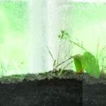 Neue Arbeiten von Monika Klein und Horst Busse