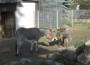 """""""Linda"""" zieht in den Rauenberger Tierpark ein"""