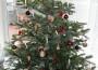 Alle Jahre wieder… taucht die Frage auf-wohin mit dem Baum …