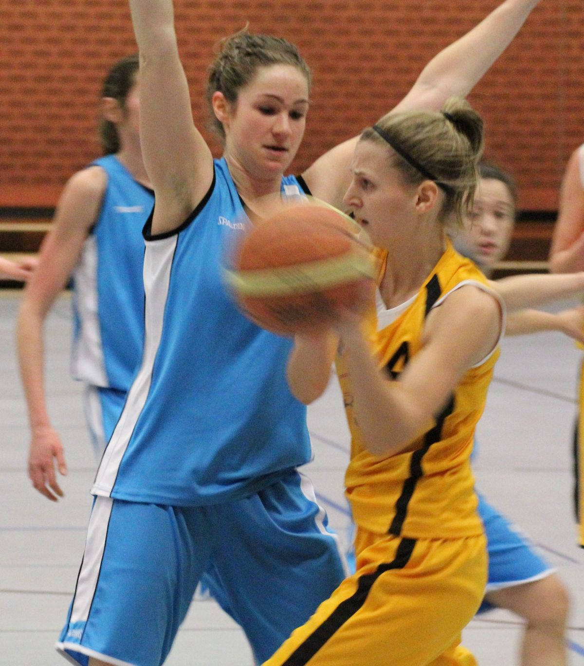 sandhausen basketball