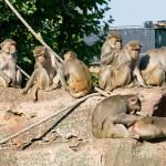 Inventur im Zoo: 180 Tierarten leben im Zoo Heidelberg