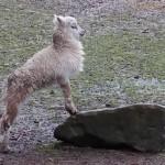 Karfreitag im Angelbach Tierpark Rauenberg