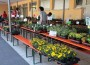 Horrenberger Blumenmarkt – LIVE