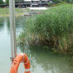 Walt Disneys Schwimm-Spaß-Tour im AQWA Walldorf