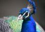 Heute: Tierpark Walldorf feiert großes Familienfest