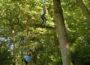 Bogenschießen, Kletteraktionen und Barfußpfad