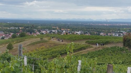 Rauenberg-Weinwanderung-2
