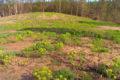 Wunderschöner Wald bei Walldorf: Naturschutz in der Schwetzinger Hardt