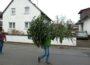 Walldorf: Tannenbaumaktion der EGJ am 14.01.