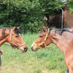 Ponyreiten am Sonntag in Wiesloch