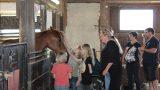 """Weihnachtsmarkt bei """"Rosinantes Paradies für Pferde in Not e.V."""""""