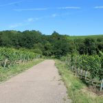 Weinwanderung der Freunde der Kunst und der Heimatgeschichte Weinstadt Rauenberg e.V.