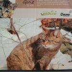 """""""Wildkatzensprung"""" – Ausstellung in der Stadtbücherei Walldorf"""