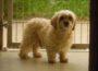 Hund auf Abwegen, Hinweise auf Eigentümer erbeten!