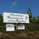3. Rauenberger Weinwanderung – Rückblick mit großer Fotostrecke und Video