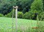 Anschlag gegen den Naturschutz in Altwiesloch – wer hat was bemerkt