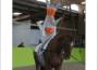 Heute noch: Nordbadische Meisterschaften im Gruppen- und Einzelvoltigieren im Reit-und Fahrverein, Wiesloch