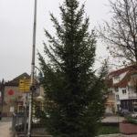 Aus Garten-Koniferen werden Weihnachtsbäume