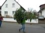 Morgen, 13.01.: Tannenbaumaktion 2018 der EGJ in Walldorf