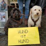 Stellungnahme zur Kampfhunde Definition und Kampfhundesteuer in Wiesloch von Dr. med.vet. Manfred Weichert + SWR Bericht
