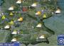DWD:  Wetterbericht für morgen –