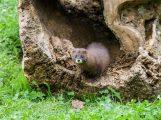 Zoo Heidelberg ist guter Hoffnung – ein Ausflug lohnt allemal