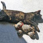 Junge Katze entlaufen – wer kann helfen? Sie kann überall sein– Ist hier fremd