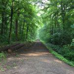 Rohstoffrückgewinnung im Dämmelwald