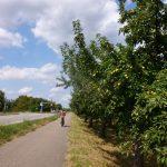 """Walldorf: """"Faire Woche"""" am 15. September mit großer Apfelsaftaktion für alle"""