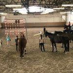 Gelassenheitstraining für Pferd und Reiter war ein voller Erfolg