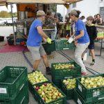 Apfel-Sammelfieber in Walldorf