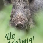 Wildschweine in Sicht?