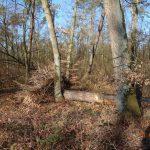 Walldorf: Fotonachlese zu den umgestürzten Bäumen in der Heidelberger Straße