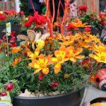 Funny Honey – Pflanzentaufe im Wagner FLORAPARK