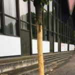 Bäume mutwillig zerstört – Was soll das?