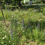 Stadtgärtnerei stellt um auf Artenvielfalt