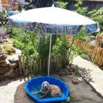 So kommt Ihr Haustier gut durch den Sommer