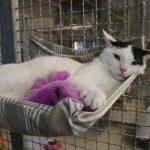 Tom-Tatze-Tierheim – Tag der offenen Tür 2019